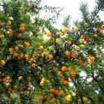 kent, autumn, outdoors, autumn colours, autumn scene, trees, autumn trees