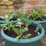Debbie, National Gardening Week, Gardening, Garden, Plants, Spring Blooms, Flowers, Home, Lifestyle Blogger, Top UK Lifestyle Blogger, UK Blogger