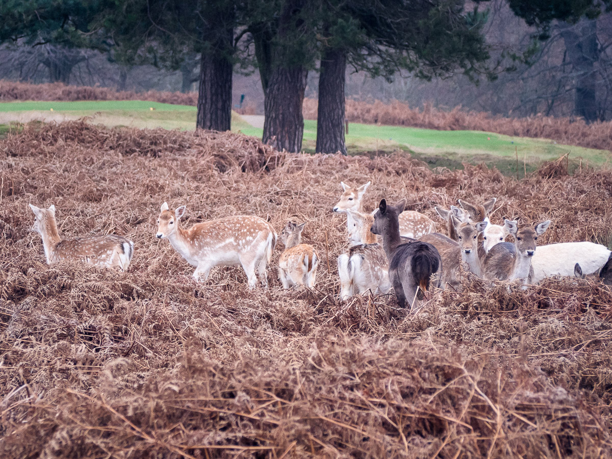Knole Park, Kent, Deer, It's A Danielle Life, Kent Blogger, Where to go in Kent