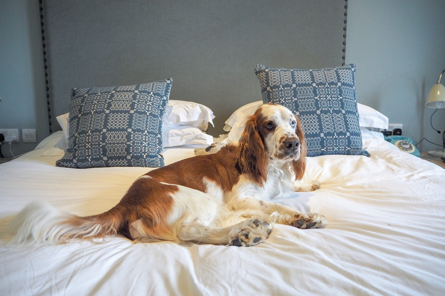 The Fish Hotel, Dog Friendly Hotel, Dog Friendly Travel, Cotswolds, Cotswolds Hotel, It's A Danielle Life, Travel Blog, Hotel Review, Falcon Explores, UK Hotel, Staycation
